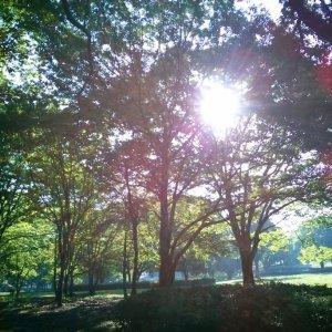 朝陽の公園