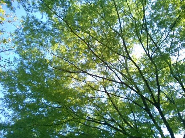 空の青と葉の緑