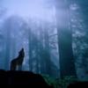 おばあさまはどのようにしてウェアウルフになったのか|タニス・リー著『狼の森』